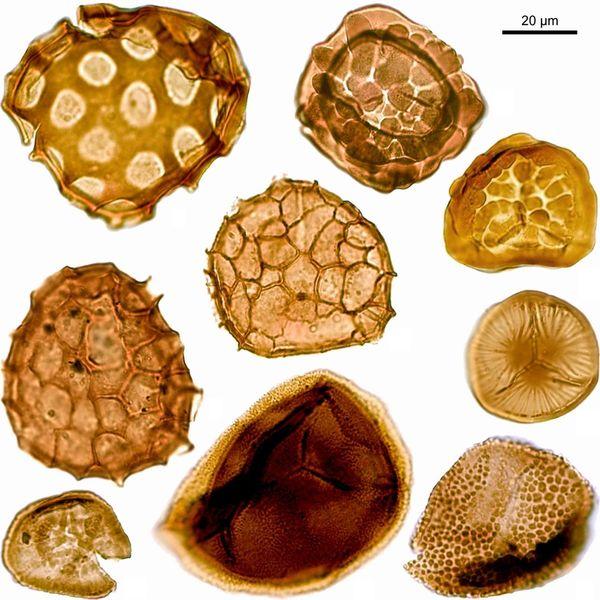 2007-Miospores