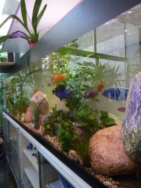 aquarium_02_600