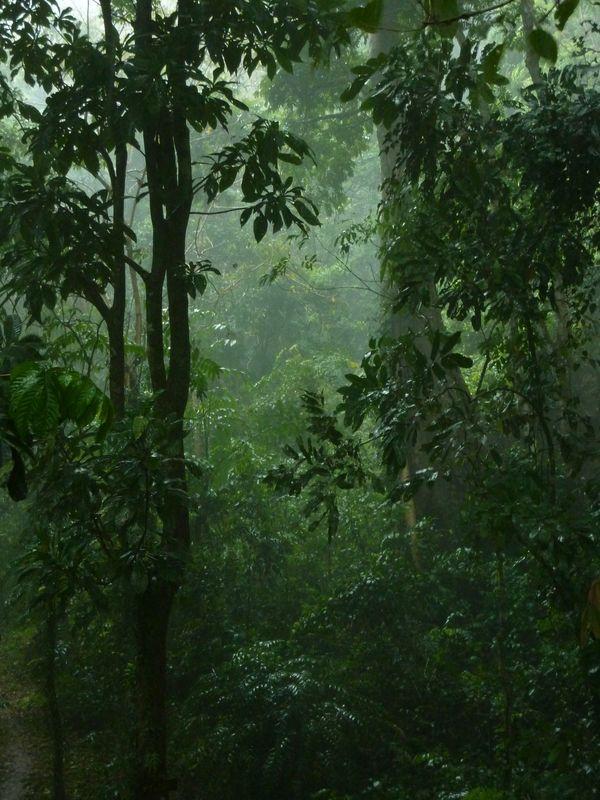 Rainforest de khao sok ... sous la pluie